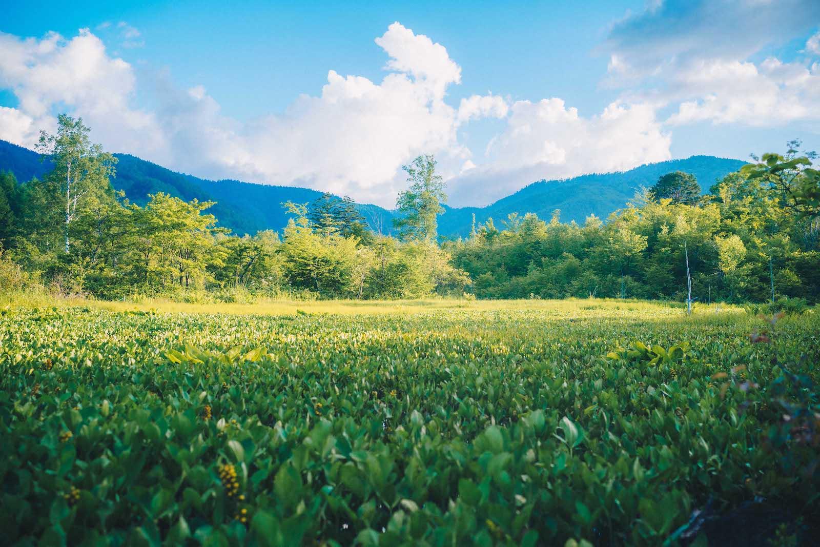 夏の乗鞍高原の景色