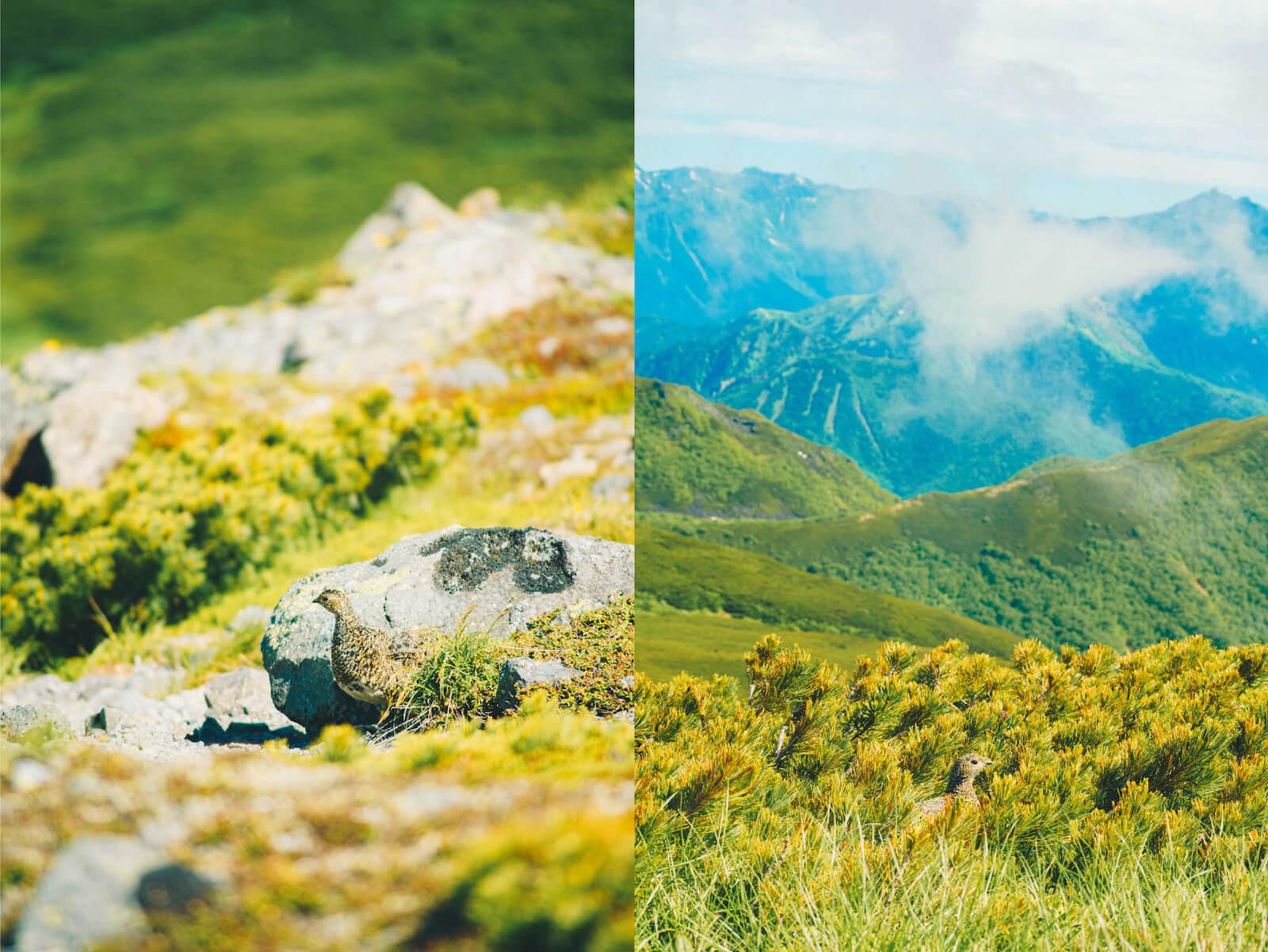 長野県乗鞍高原の景色