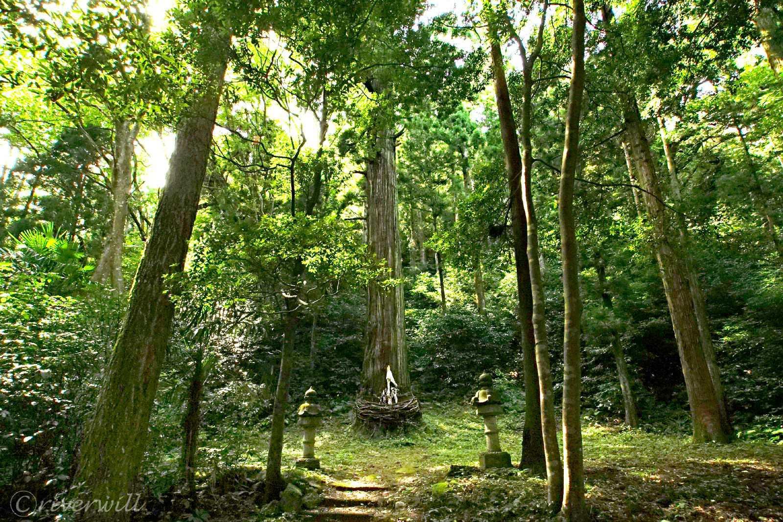 杉の大木が御神体の「大山神社」