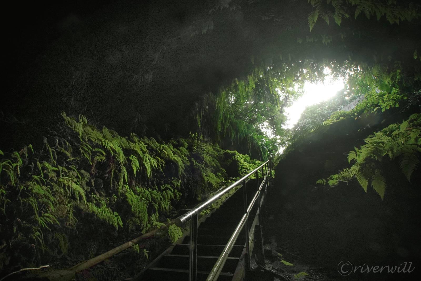 神秘的な暗川の入り口