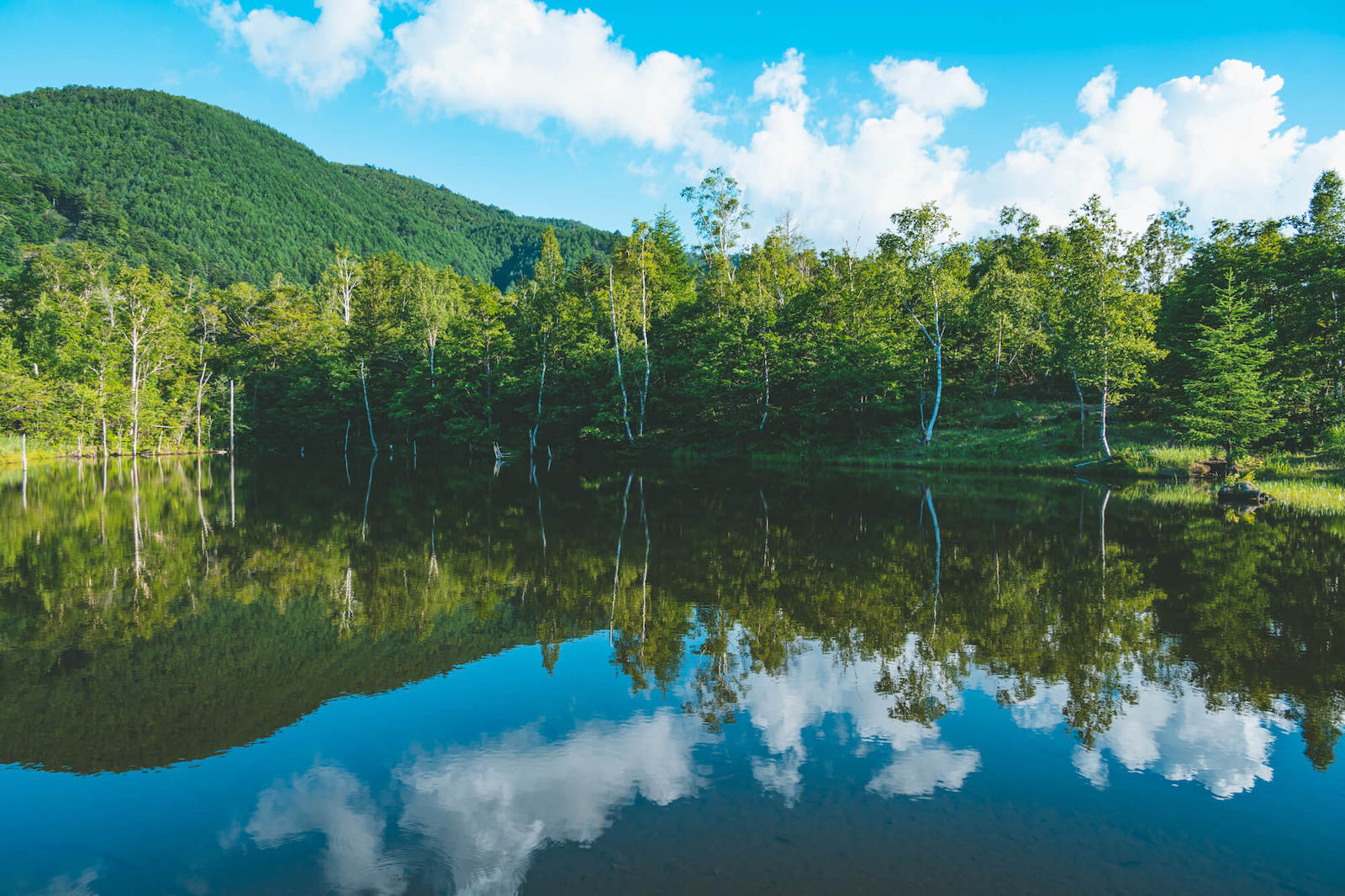 夏の乗鞍高原 まいめの池