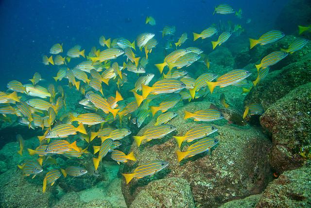 コイバ国立公園とその海洋保護特別地帯