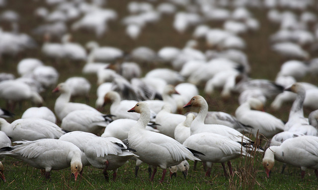 ランゲル島保護区の自然生態系