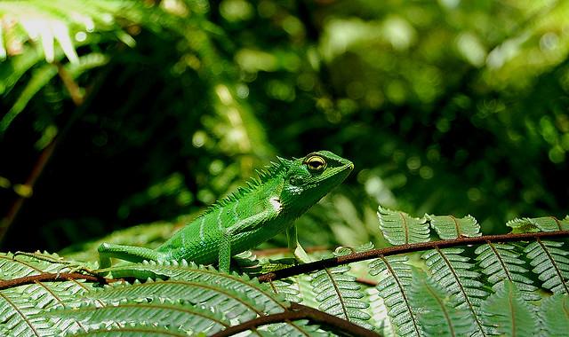 シンハラジャ森林保護区
