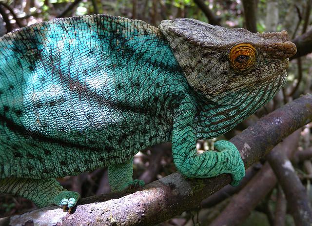 アツィナナナの雨林 マダカスカル 世界遺産