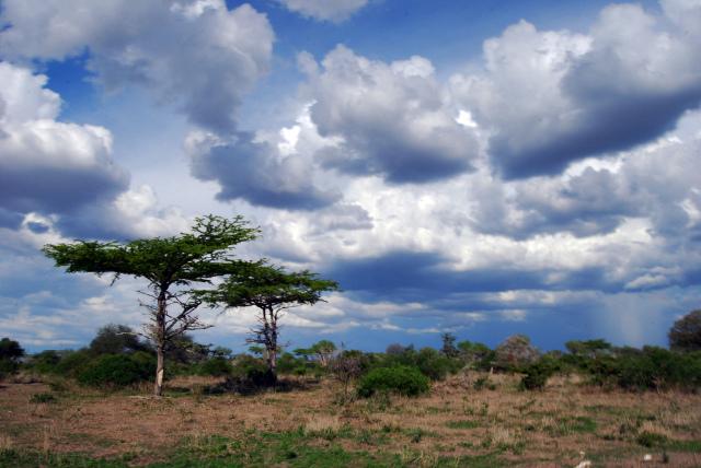 タンザニアのセルース猟獣保護区
