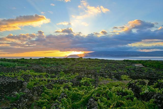 ピーコ島のブドウ園文化の景観
