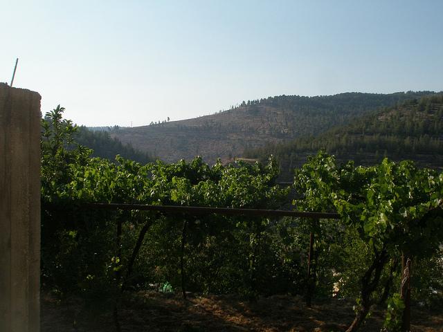 オリーブとワインの土地パレスチナ