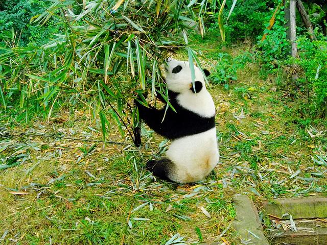 四川ジャイアントパンダ保護区群