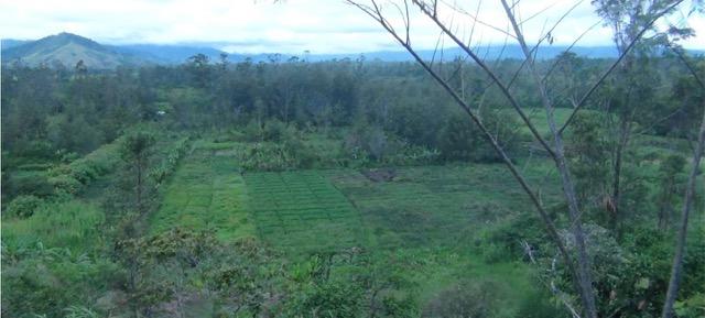 クックの初期農耕遺跡