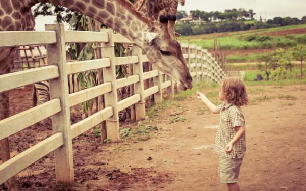 世界の人気動物園
