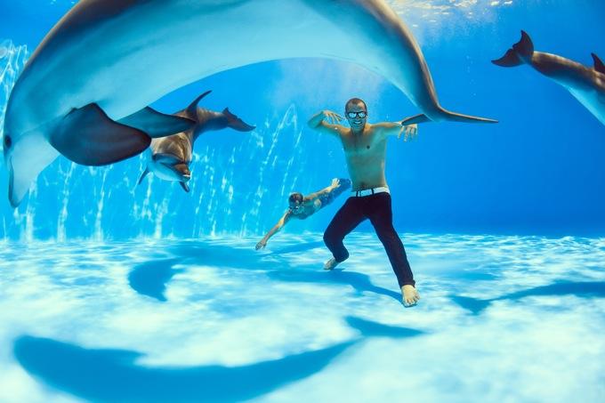 イルカと一緒に泳げる場所