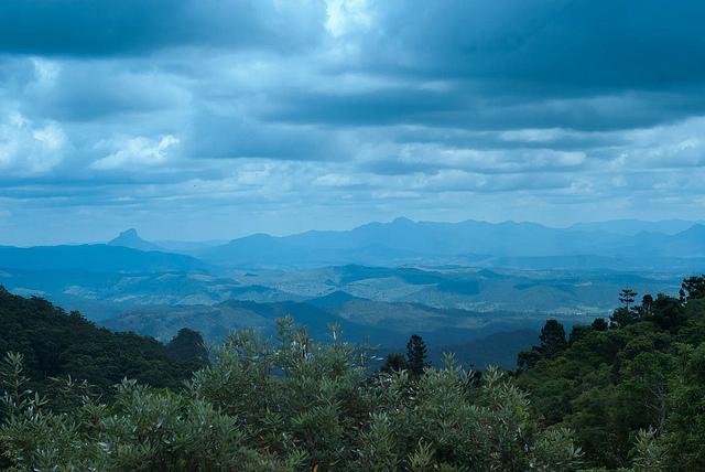 オーストラリアのゴンドワナ雨林