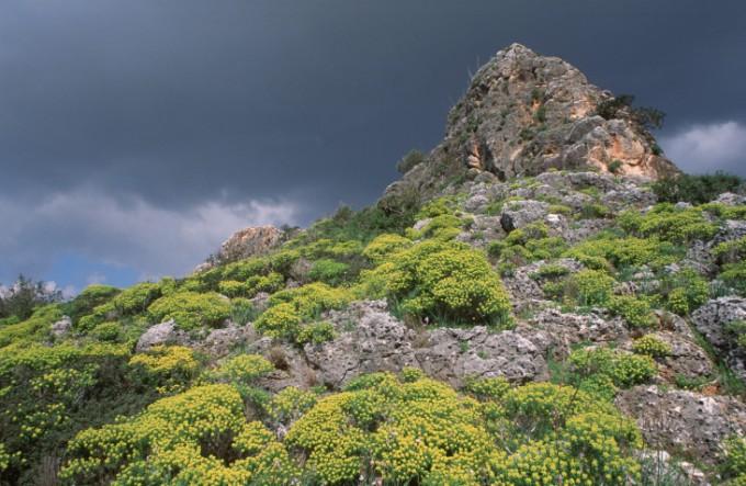 カルメル山の人類の進化を示す遺跡群