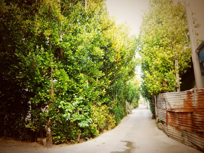 今帰仁村の小道