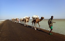 「ラクダのキャラバン」が消滅の危機?1,000年以上続いてきた歴史に終止符が訪れる理由とは