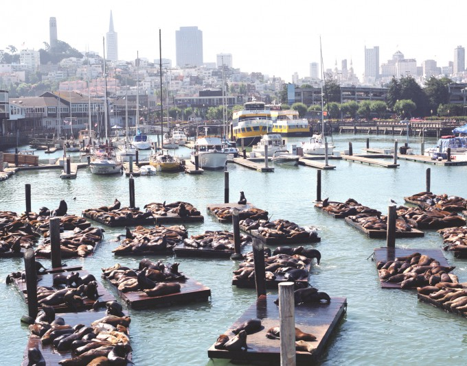 Sea-Lions-at-Fisherman's-Wharf