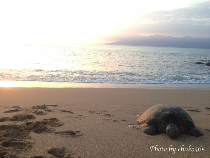 Turtle1_afternapilibeach