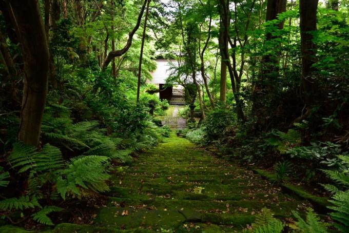 梅雨に映える苔が美しい日本の景色10選