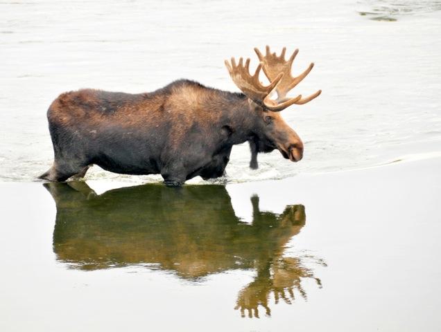 北アメリカのカナダ―バンフ国立公園