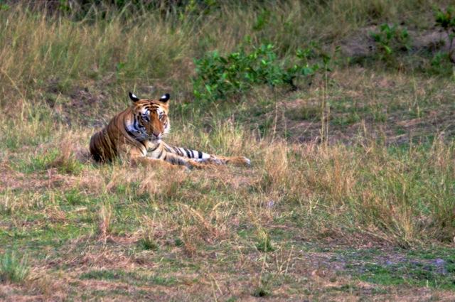 インドのバンダウガル国立公園