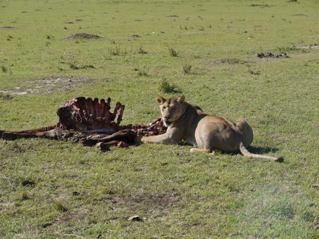 ケニアのマサイ・マラ国立保護区