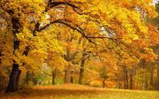 【ホッとするひと時】カナダの大自然が生み出すメープル街道の紅葉