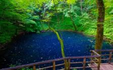 青森県の緑あふれる絶景16選