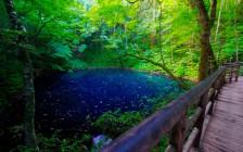 世界遺産「白神山地」に広がる太古の森!その魅力に迫る