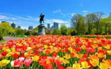 ボストンのおすすめ観光スポット17選