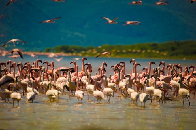 ボゴリア湖・マガディ湖 / ケニア