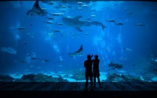 夜も楽しめる日本の水族館ベスト8