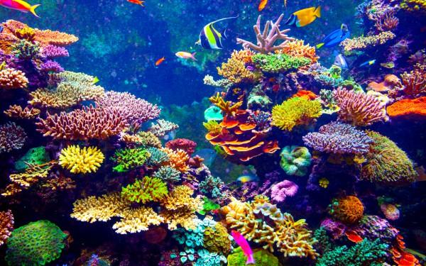 世界の水族館
