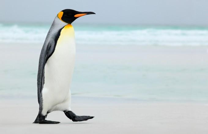 ペンギンのビーチ