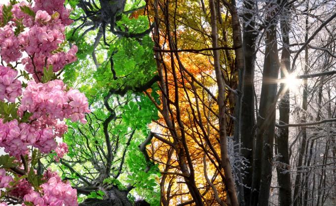 季節に合わせて旅をする、春夏秋冬それぞれの季節に行きたい国はどこ ...