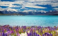 ニュージーランドの人気観光スポット37選