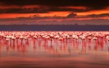 野生動物に出会える国「ケニア」の世界遺産全6選