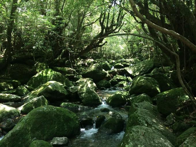 yakushima-island-463227_960_720